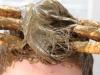 henna-para-cabelos-2