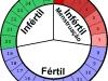 periodo-fertil-feminino-4